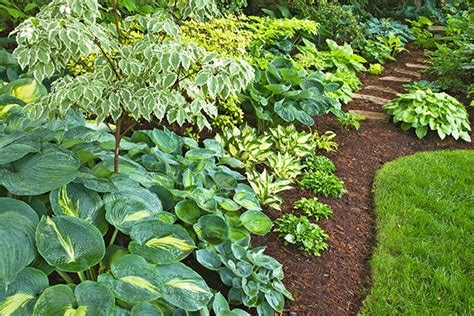 easy ways to use the hosta plant lowes home sweet home