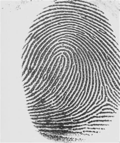 finger prints a novel app physics 186 a8 b fingerprints ridge enhancement
