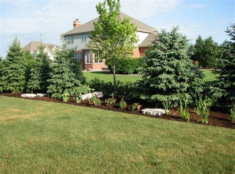 backyard privacy trees garden landscaping decoration ideas garden landscaping