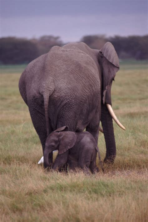 and elephant file and baby elephant jpg