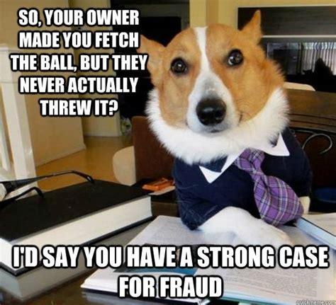 Corgi Lawyer Meme - attorney dogs funny lol dog corgi corgi pinterest