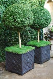 large boxwood topiaries moss black planters with trellis