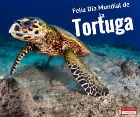 libro minicuentos de tortugas y 161 feliz d 237 a mundial de las tortugas marinas blog costasalvaje