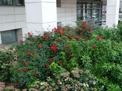Arbuste à Fruits Rouges by Arbuste 224 Fruits D 233 Coratifs C 244 T 233 Jardin