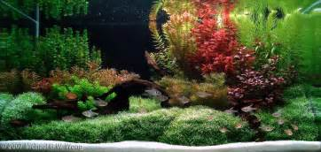 2007 aga aquascaping contest entry 142