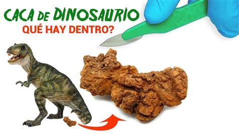 lo que habita dentro qu 233 hay dentro de caca de dinosaurio youtube