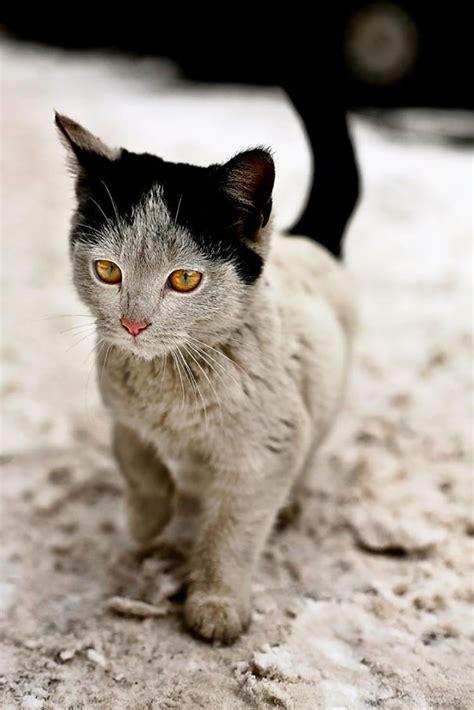 cats    unique fur patterns  top