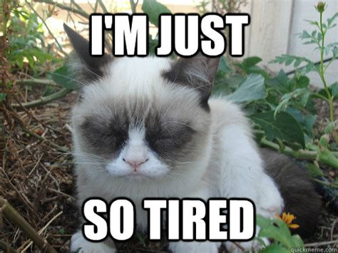 Tired Meme - i m just so tired of all of you assholes poor grumpy cat