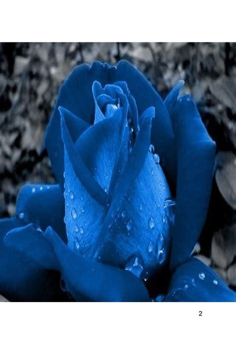 libro azul libro rosa azul