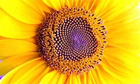 flower of life pattern in nature patterns in nature flowers