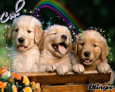 cool puppies cool puppies picture 71403122 blingee