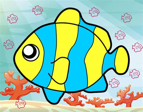 imagenes animales de mar dibujos de animales del mar imagui