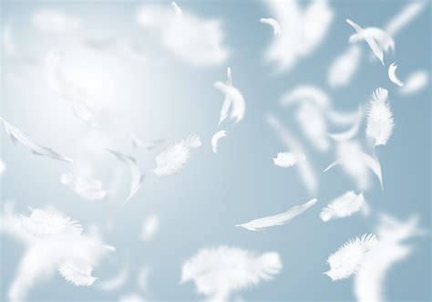 What Do White Feathers Mean?   Wishing Moon