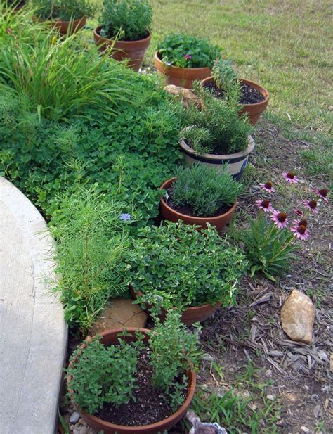 Container Herb Garden Ideas Another Herb Container Garden Idea Garden Containers Pinterest