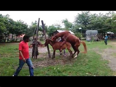 download video tutorial kawin full download bagaimana kuda sumbawa kawin