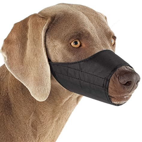 muzzle for dogs muzzles do you a quot favorite quot doberman forum doberman breed forums