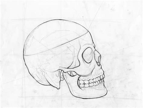 line drawing animal skull line drawing www imgkid the image kid
