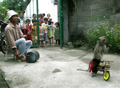 topeng monyet wikipedia bahasa indonesia ensiklopedia bebas