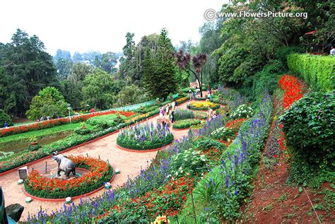 ooty flower show 2017 photos