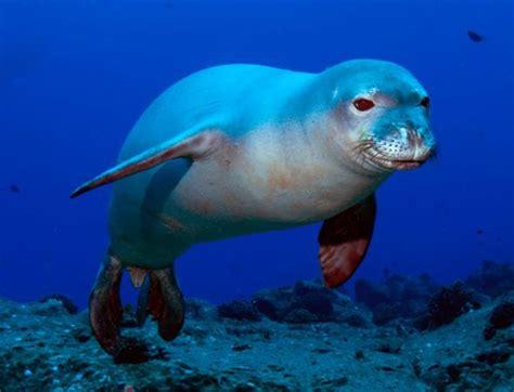 los 14 animales marinos en peligro de extinci 243 n