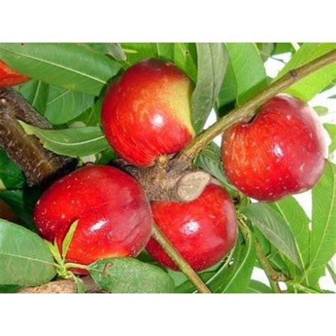 piante da giardino prezzi offerte piante da frutto in offerta confronta prezzi giardinaggio