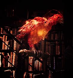 the real fawkes books fanda s book shelf if only i could meet a hotter