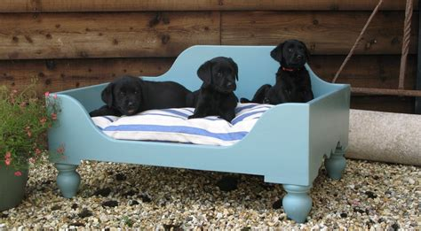 cool bed for dogs 20 unbelievably cool beds for your pet dog