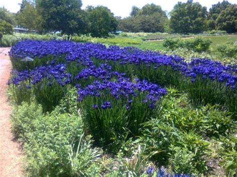 Chicago Botanic Garden Reu Chicago Botanic Garden Clm Internship Program