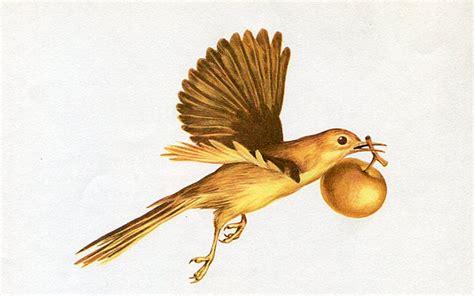Golden Bird sandro nardini the golden bird translated from grimm by