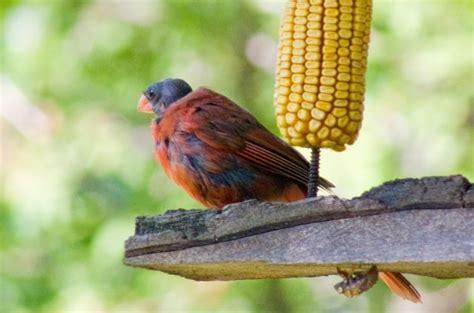 wild bird diseases birds and blooms