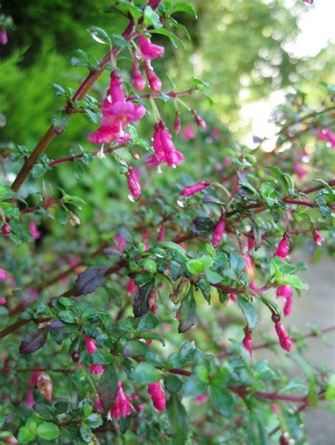 45 best east facing garden images on pinterest gardening