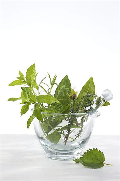 fiori medicinali fitoterapia piante medicinali e fiori in un mortaio