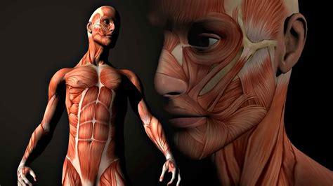 imagenes en 3d del cuerpo humano m 250 sculo esquel 233 tico anatom 237 a funcional mundo entrenamiento