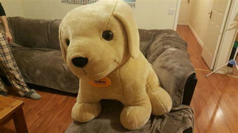 golden retriever puppies dublin 3ft andrex golden retriever puppy for sale in firhouse dublin from fran kev