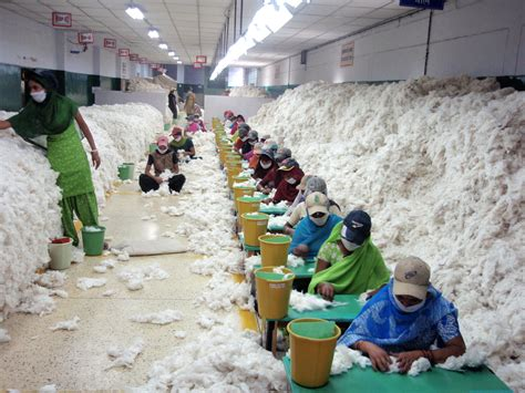Cotton Paper Process - useful notes on the distribution of cotton textile
