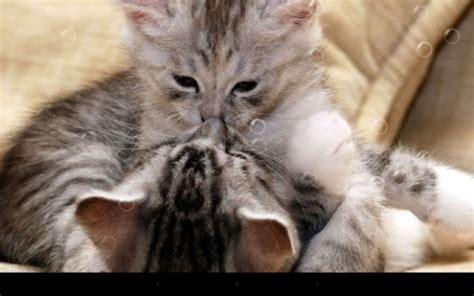 wallpaper chat humour funny cats pour android 224 t 233 l 233 charger gratuitement fond d