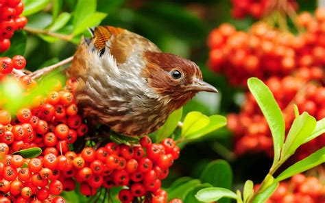 beautiful small birds wallpapers entertainment only pink birds wallpapers entertainment only
