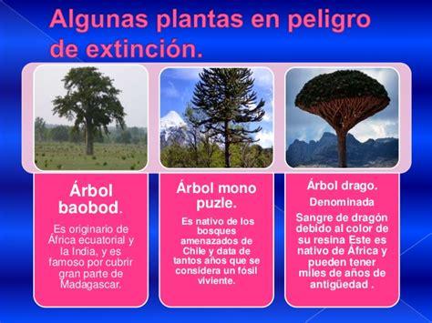 imagenes animales y plantas en peligro de extincion plantas en peligro de extinci 243 n