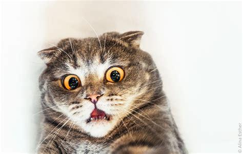 Shocked Cat Meme - surprised cat blank template imgflip