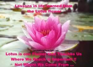Lotus Blossom Meaning Lotus Flower Meaning Quotes Quotesgram