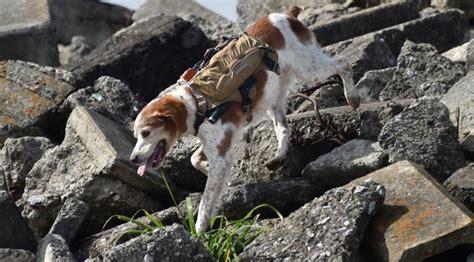 Gps Tracker Peliharaan Dengan Kalung Anjing V30 teknologi gps yang tidak boleh di sepelekan