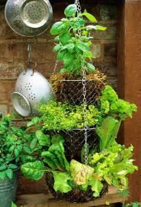 hanging herb garden dishfunctional designs hanging basket herb garden diy