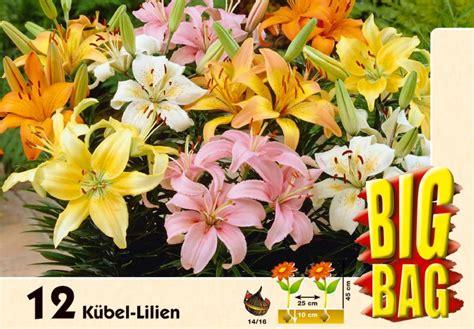 sind lilien winterhart 2357 sind lilien winterhart wundersch n und robust die lilie
