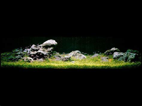 aquarium design amano indonesia aqua design amano aquariums australia nature aquarium