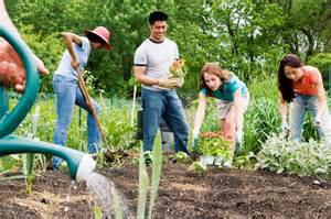 summer gardening summer gardening tips the posture clinic