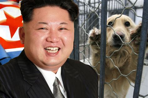 un dogs jong un declares superfood in korea dogmeat served when the pup is