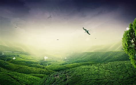 Landscape Description Definition Green Landscape Wallpaper High Definition High Quality