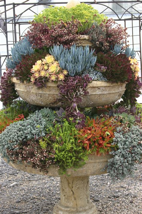 Succulent Gardens Ideas Sufferin Succulents