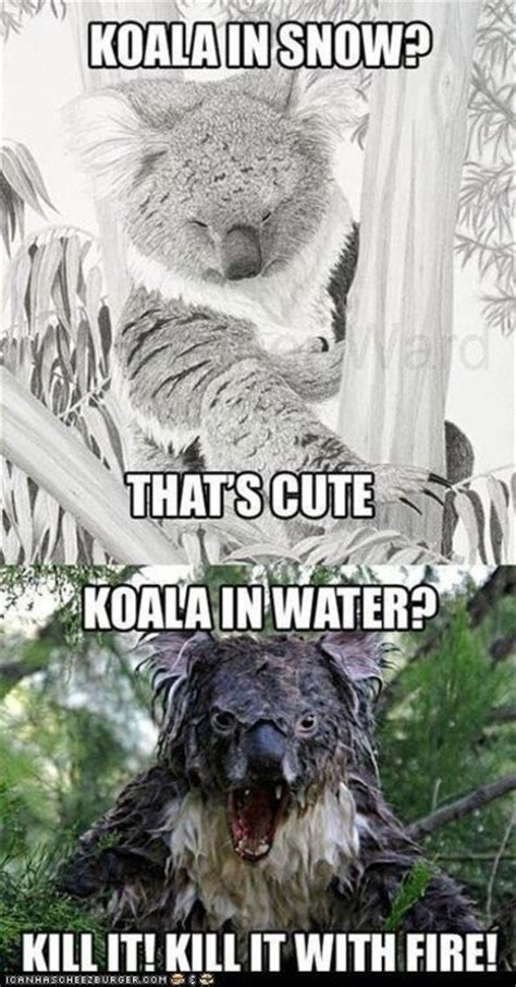 Scary Internet Memes - koala burn omg this is hysterically scary internet