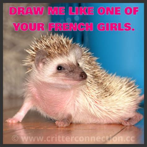 Hedgehog Meme - hehe hedgehogs pinterest french funny and